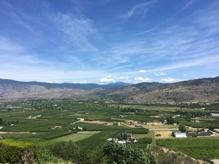 View from the Winery