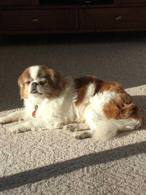 Dog in the Sun